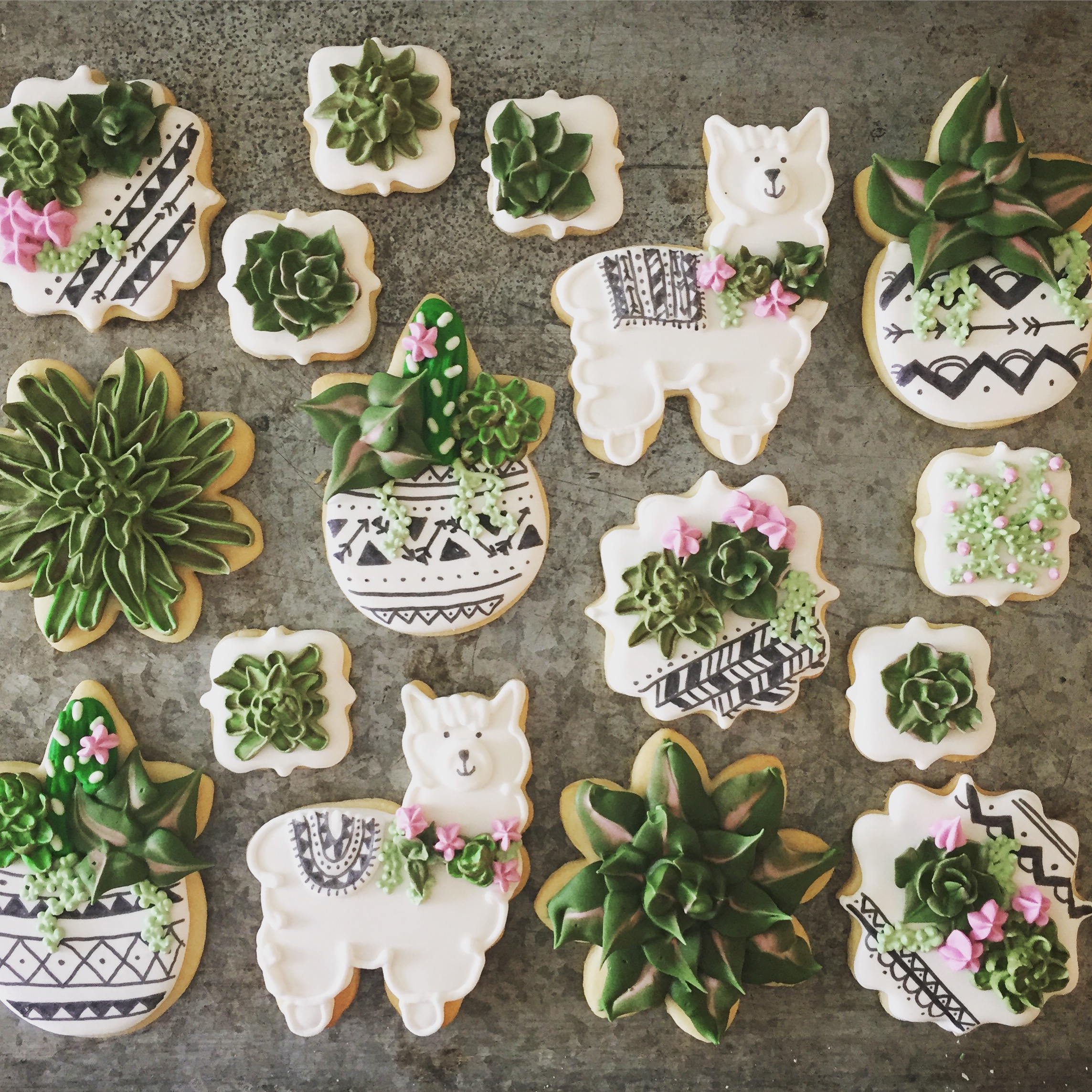Boho Succulents Llamas Cookies Amuse Bake Shop